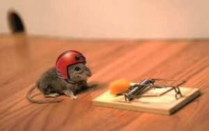 Rato esperto